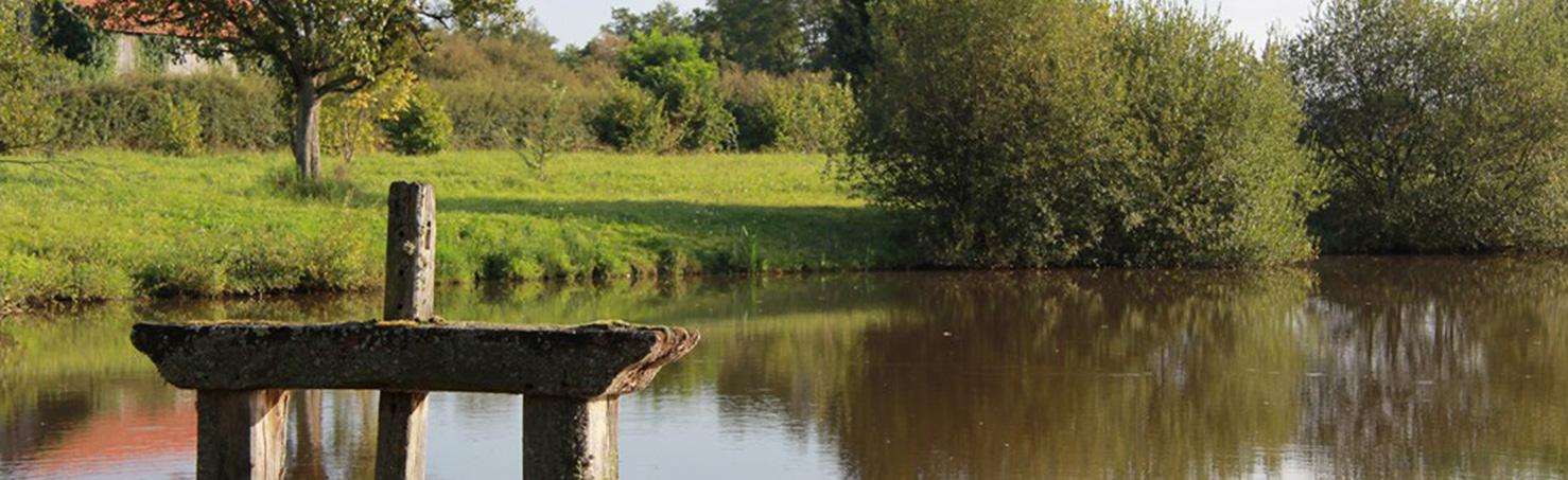 Nos étangs de Sologne